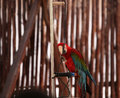 Clever parrot parrots they are very lovely and they can dance and do somersaults they are good at maths Stock Images