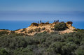Cliff - Torrey Pines State Natural Preserve - California Royalty Free Stock Photo