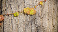 Climbers on a tree trunk in autumn Royalty Free Stock Image