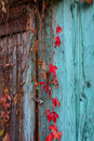 Climbing plant on an old door Royalty Free Stock Photo