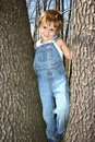 Climbing trees Stock Image