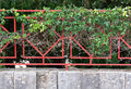 Clinging green plant on red fence stone base Royalty Free Stock Images
