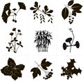 Clip art black objects on a white background the branches of the ginkgo barberry bird cherry clover bamboo a morning glory Royalty Free Stock Photography