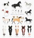 Clip art horse markings illustrations of facial and leg primitive of dun coat coloring also variations of some rare coat Royalty Free Stock Photography