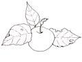 Clip art a pulso dibujo de apple con las hojas Fotos de archivo libres de regalías