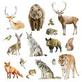 Clipboard set of watercolor hand drawn animal cliparts