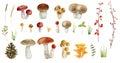 Clipboard set of watercolor hand drawn mushrooms