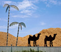 Clipped camel silhouettes and metal palms at sawdust storage fen fence desert similarity idea Royalty Free Stock Photo