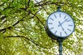 Image : Clock bellow the tree for  portrait