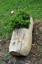 Clog flower pot Stock Photography