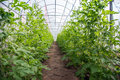 stock image of  Close garden for lab to GMO