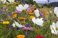 close look at multi colorful flowers in meadow at sunshine summer day Royalty Free Stock Photo
