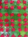 Red flowers arrange over green leave