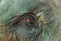 Close up asia elephant eye Royalty Free Stock Photo