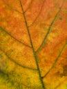 Close up on a autumn leaf Stock Photo