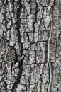 The close up of bark detail Royalty Free Stock Image