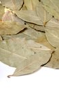 Close up of bay leaves used for cooking Stock Photography