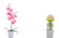 Close up of beautiful sphere shape flower and pink orchid in whi