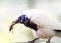 Bird with prey Royalty Free Stock Photo