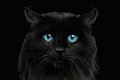 Close-up Black Cat with Blue Eyes Royalty Free Stock Photo