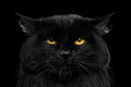 Close-up Black Cat with Yellow Eyes Royalty Free Stock Photo