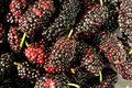 Close up of blackberries Royalty Free Stock Photo