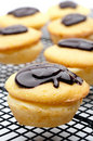 Close-up of a Boston Cream Pie Cupcakes Royalty Free Stock Photo