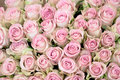 Close up of a bouquet of pink roses fresh gentle Royalty Free Stock Photo