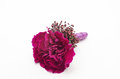 Close-up boutonniere with carnation and skimmia on white Royalty Free Stock Photo