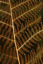 Close-up of brown fern leaf Stock Photos