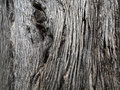 Close up of brown tree bark with long crackly lines and knots going down it Royalty Free Stock Images