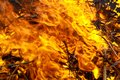 Close-up burn waste fire flame and smoke Royalty Free Stock Photo