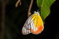 Close up of butterfly colorful clings to green leaf as its habitat Royalty Free Stock Image