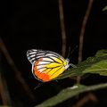 Close up of butterfly colorful resting on green leaf as its habitat Stock Photos