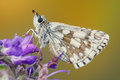 Close-up of a butterfly on a flower Royalty Free Stock Photo