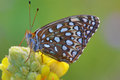 Close up buttery fly on a flower butterfly resting in meadow Stock Image