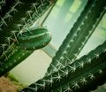 Close up of cactus. Stock Image