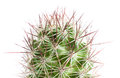 Close up of cactus globe shaped with long thorns on white background shallow depth field Royalty Free Stock Photo