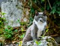 stock image of  Close-up of cat posing on a stone, looking defiant at the camera