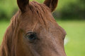 Close Up of a Chestnut Brown Horses Eye Royalty Free Stock Photo