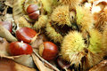Close-up of chestnuts Royalty Free Stock Photo