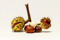 Close Up Chestnuts in nutshell Royalty Free Stock Photo