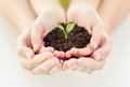 Close up of child and parent hands holding sprout people charity family ecology concept cupped soil with green at home Royalty Free Stock Image