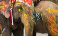 Close up of colorful painted elephant head Royalty Free Stock Photo