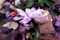 Close up of colorfull flowers pot pourri Royalty Free Stock Photo