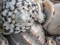 Close up of cone shell Royalty Free Stock Photo
