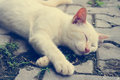 Close up cute white kitten cat sleep on cement floor vintage ton Royalty Free Stock Photo