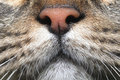Close up da face do gato Fotografia de Stock Royalty Free