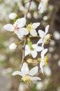 Close up das flores brancas Imagem de Stock Royalty Free