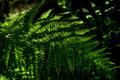 Close up detail abstract of fern in shadows. Royalty Free Stock Photo